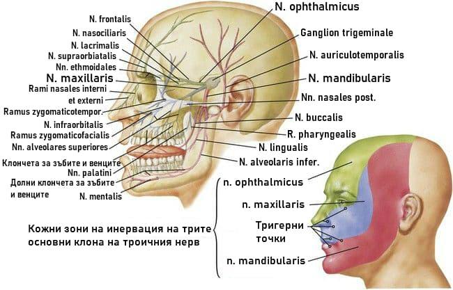 Клонове на троичния нерв