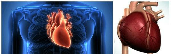Кога се извършва трансплантация на сърце (сърдечна трансплантация, присаждане на сърце)?