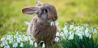кокиче и зайче
