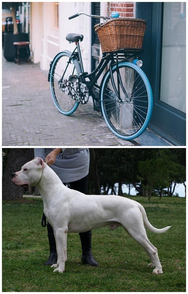 Велосипед и куче