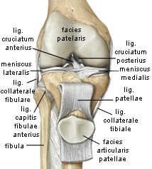 колянна става