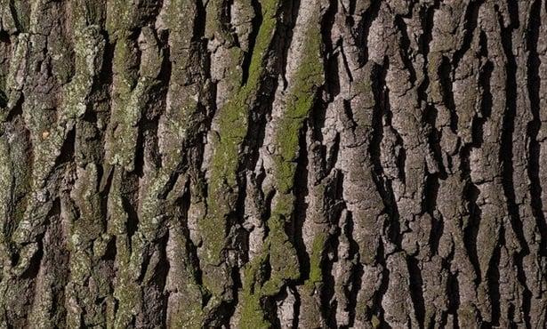 кора на дърво