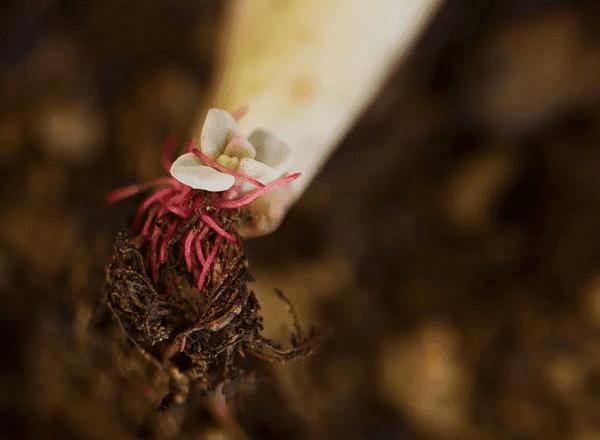 Пускане на корен и листа