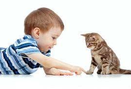 Приложението на котешки нокът при деца е желателно да става след консултация с лекар