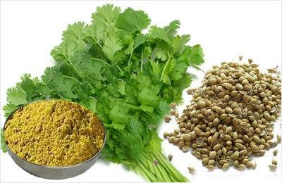 Кориандър - семена, прах и растение