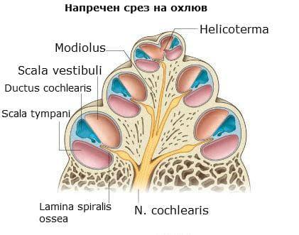 Костен и ципест лабирин на охлюв