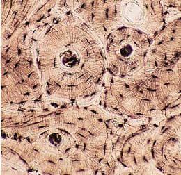 костна тъкан