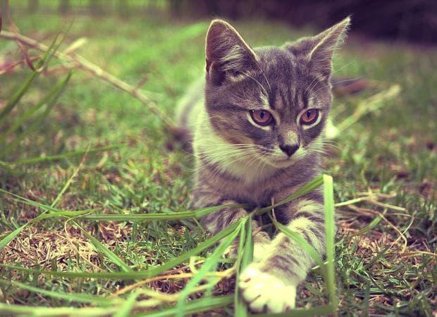 Котка на поляна