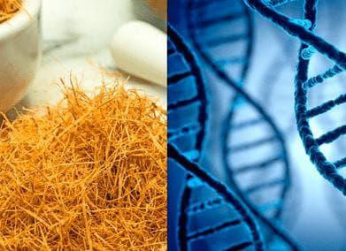 Котешкият нокът е доказал способността си да възстановява ДНК