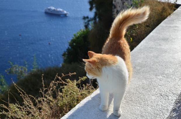 Котка, която гледа към кораб в морето