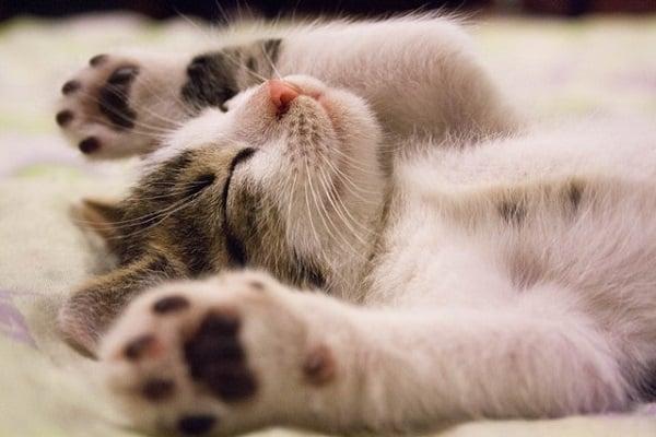 мъркането на котките