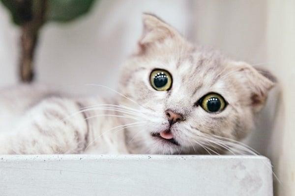 кртика към котките