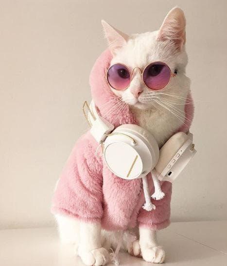 Котката Зипа
