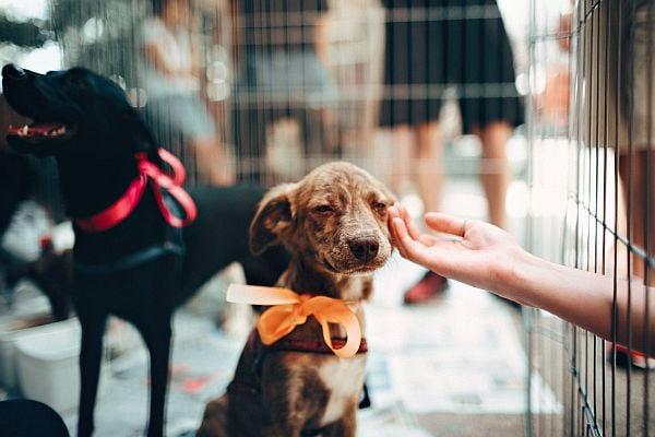 куче, приют, осиновяване на куче