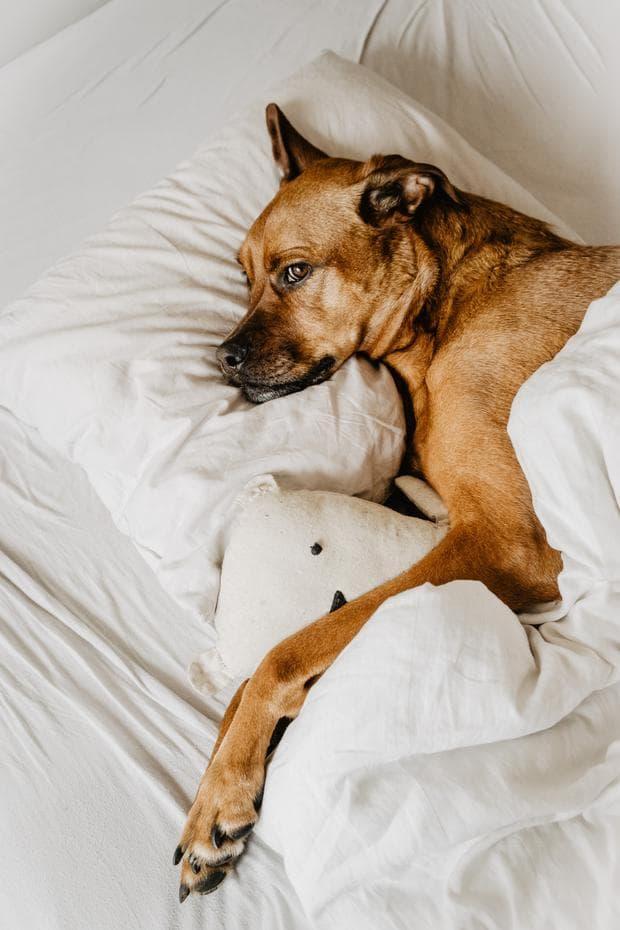 Куче в леглото