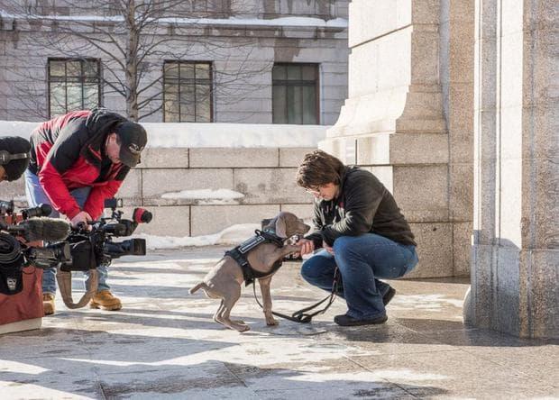Тримесечно куче ще надушва вредители в музей за изящни изкуства