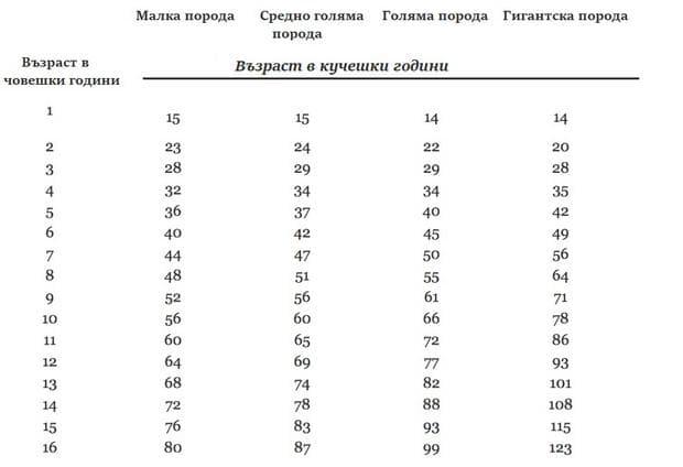 Таблица за определяне на възрастта на кучетата спрямо човешките години