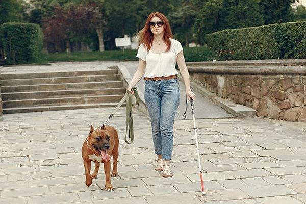 куче асистент, сляпа жена с куче