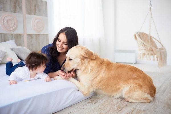 куче, дете