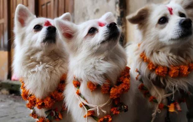 Три кучета на фестивала Тихар