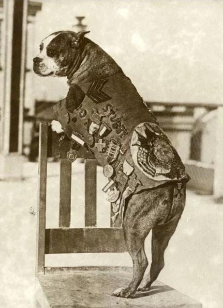 Кучето Стъби