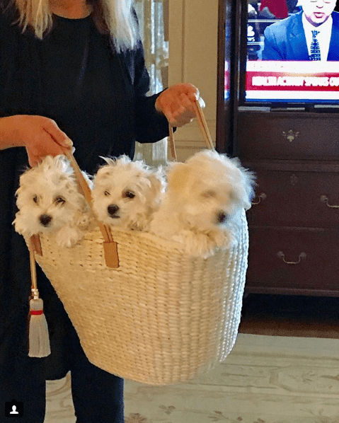 Кучетата на Барбара Стрейзънд