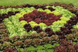 различен цвят листна маса