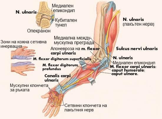 Лакътен нерв