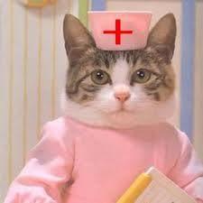 Как котките лекуват