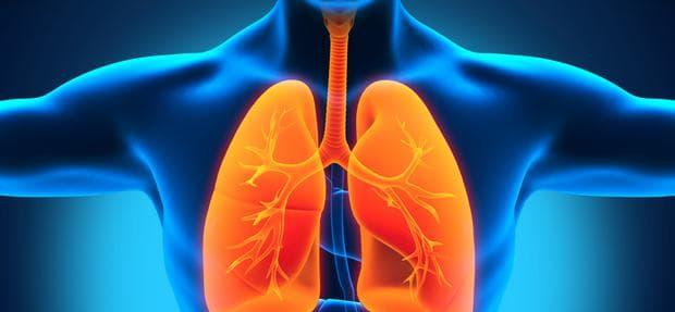 трахея и бели дробове