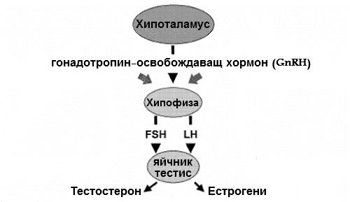 Секреция на лутеинизиращ хормон