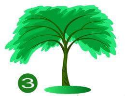дерево №3
