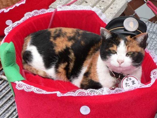 котката Тами