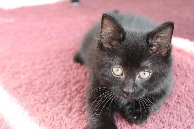 черни котки