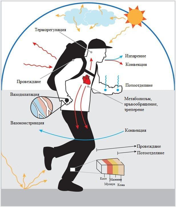 механизми на терморегулация