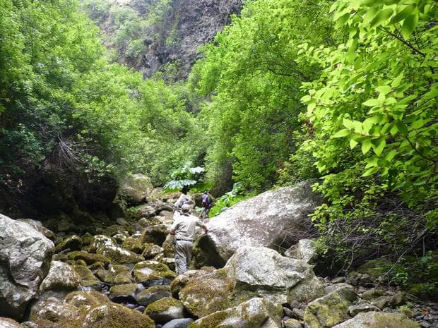 маки бери в чилийските гори