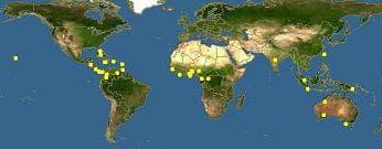 карта ямайски плод