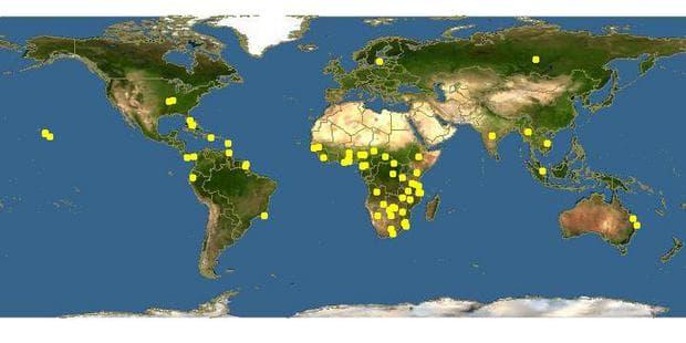 карта разпространение на кигелия