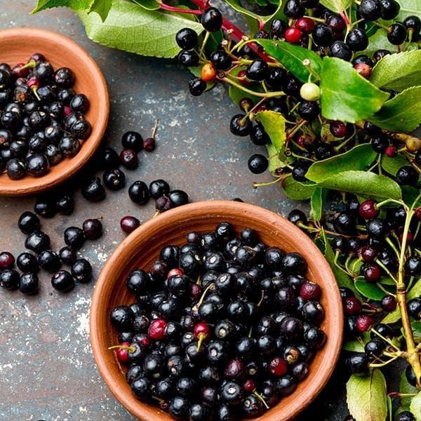 маки бери плодове
