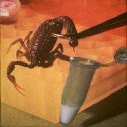 Медицинско използване на отрова от скорпион