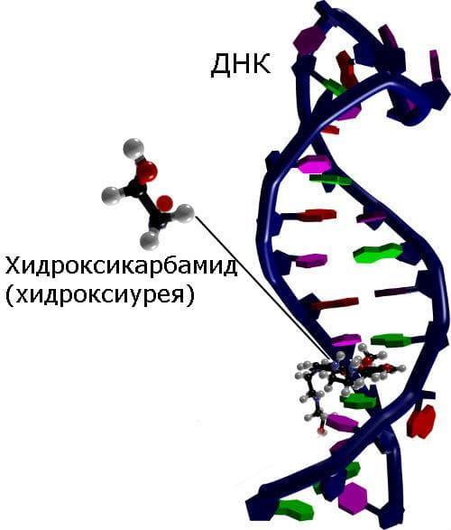 Механизъм на действие на хидроксикарабмид