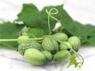 мелотрия плодове