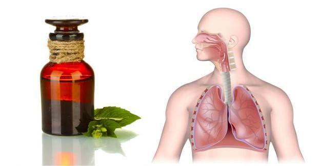 Мента и дихателна система