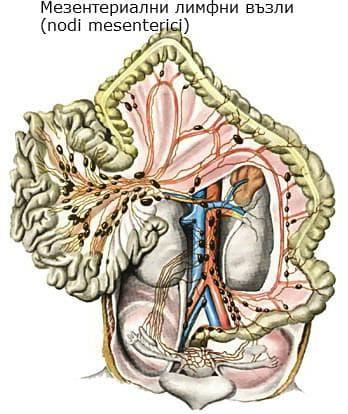Мезентериални лимфни възли