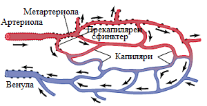 микроциркулация