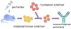 monoclonal-antibodies