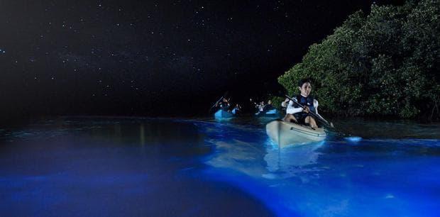 Море от звезди