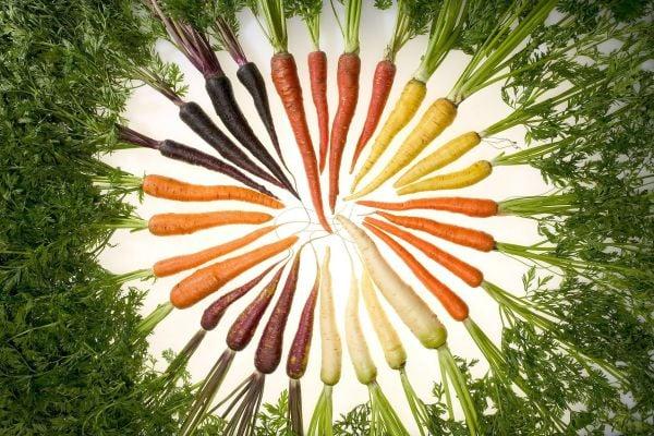 моркови с различен цвят