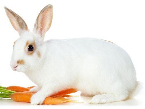 Моркови - здравни ползи