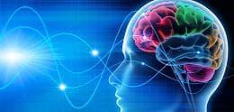 главен мозък